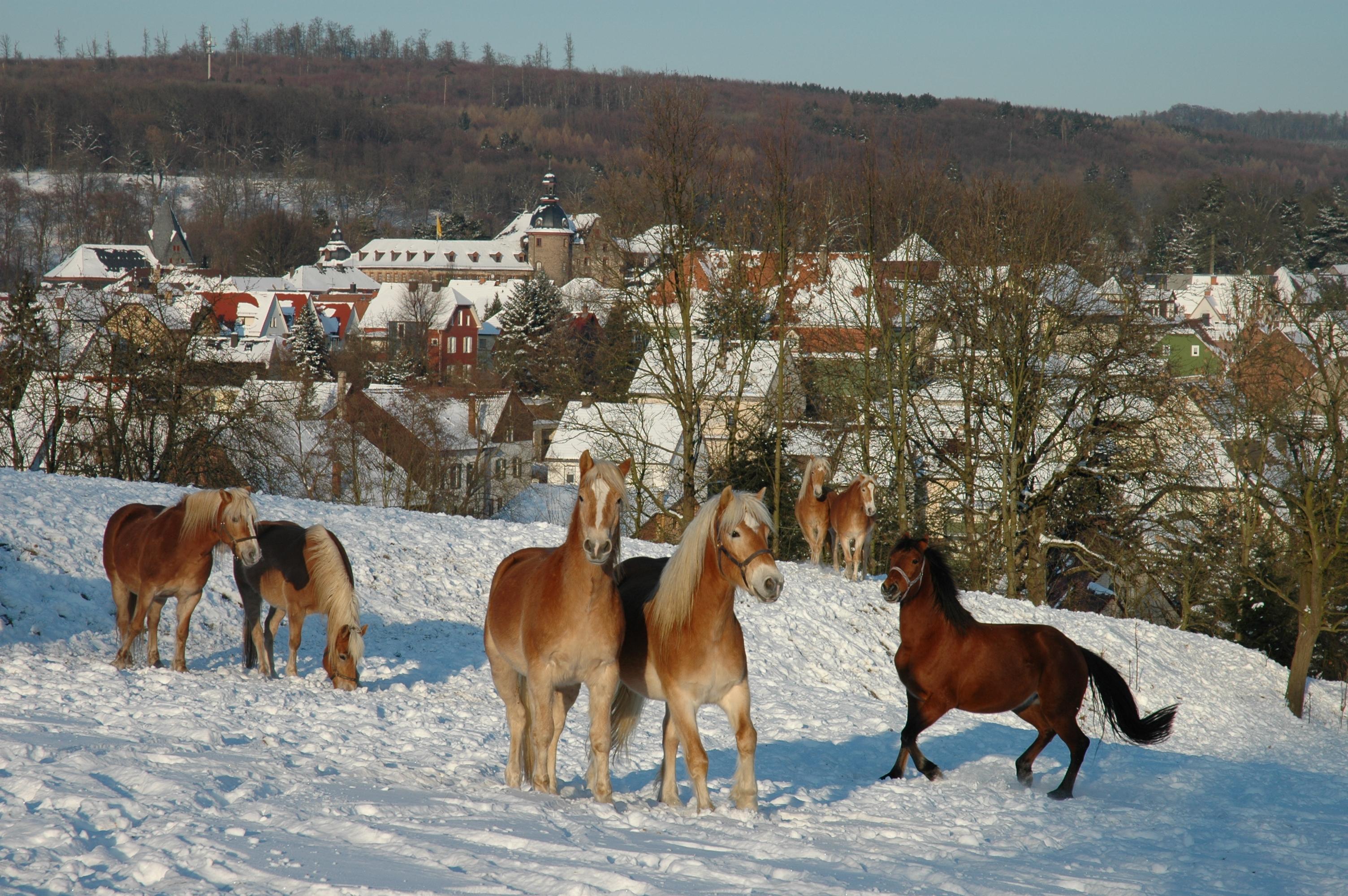 Winterstimmung in Laubach